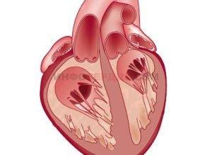 Все о синдроме ранней реполяризации желудочков
