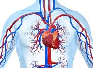 Почему возникает постинфарктный кардиосклероз и можно ли его вылечить?